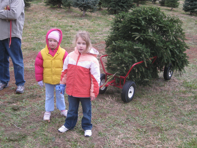 children with a freshly cut Christmas tree